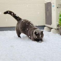 snow day ベランダに積もる雪を見たUSA(うさ)は、楽しそうにしていました。