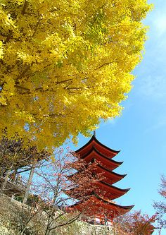 Ginkgo leaves at Miyajima Five-Storied Pagoda, Hiroshima, Japan