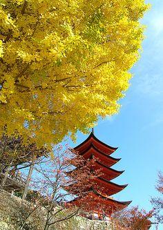 Ginkgo leaves at Miyajima Five-Storied Pagoda, Hiroshima, Japan