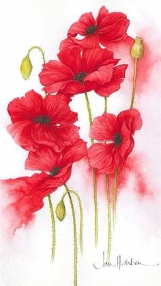 Flowers in Art, watercolor ✿⊱╮