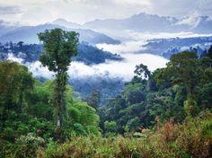 Amazons - Brazil