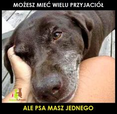 I Love Dogs, Love You, My Love, Animals And Pets, Cute Animals, Happy Photos, Animal Projects, Funny Facts, True Stories