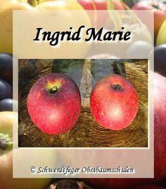 Ihr Obstbaum-Shop! Alte Obstsorten - Alte Apfelsorten - www.alte-obstsorten-online.de - Apfelbaum, Apfel 'Ingrid Marie' - alte Apfelsorte!