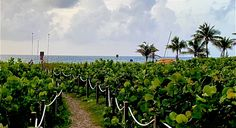 Boca Raton Beach, Sunrise Pictures, Us Beaches, South Florida, Modern Contemporary, Vineyard, Landscaping, Ocean, Sunset