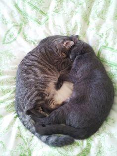 My Cats Often Sleep Like This