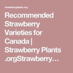 Recommended Strawberry Varieties for Canada | Strawberry Plants .orgStrawberry…