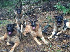 Onze 4 Duitse Herders