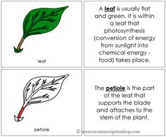 Leaf Nomenclature Book (Red) - Describes 6 Parts of the Leaf.