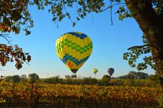 Balloons along Woolsey Road, Santa Rosa, Sonoma County. Mary Anne Veldkamp / Coldwell Banker Previews International Realty www.maryanneveldkamp.com
