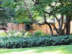 4' high cedar wood solid style fence