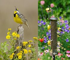 Amazing photos like this glorious yellow specimen, are yours for the taking as you convert your garden into your own private bird sanctuary...... Happy snapping!