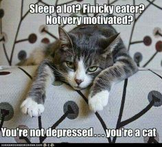 You're a cat. .