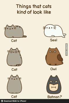 Things that cats kind of look like: cat, seal, cat, owl, cat, BATMAN?