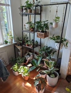 A community focused on the discussion, care, and well-being of houseplants! Room With Plants, Inside Plants, House Plants Decor, Plant Decor, Indoor Garden, Indoor Plants, Plant Aesthetic, Garden Terrarium, Cactus Y Suculentas