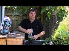 Video: How to Grow Duckweed in Aquaponics | eHow
