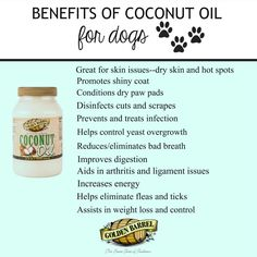Try these peanut butter and coconut oil dog treats to utilize all of the healthy benefits that Golden Barrel Coconut Oil can offer dogs. Coconut Oil For Fleas, Coconut Oil For Teeth, Coconut Oil Uses, Benefits Of Coconut Oil, Diy Dog Treats, Homemade Dog Treats, Dog Treat Recipes, Dog Food Recipes, Free Recipes