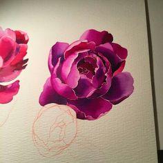 Watercolour peony