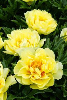 So Pretty Flowers ~ natureza deslumbrante