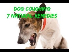 http://www.theonlinevet.com/newsletter.php How To Quickly and Easily Stop Your Dog's Coughing With 7 Natural Remedies