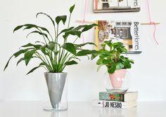 Modern DIY planter in glass