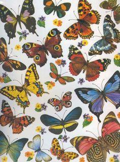 Fjärilar <3