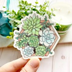 Watercolor Succulent Planter in. Sticker, Green and Blue Succulents Decal, Laptop Sticker, Water Bottle Sticker, Plant Sticker Cactus Stickers, Cute Stickers, Blue Succulents, Watercolor Succulents, Watercolor Stickers, Sell My Art, Laptop Stickers, Vinyl, Sticker Design