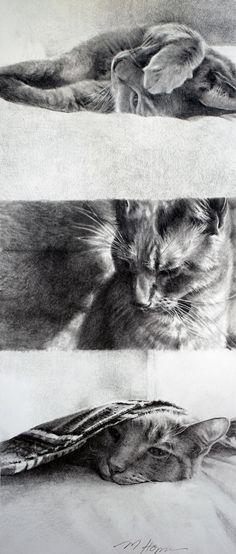 Cat Portrait Triptych Original Graphite drawing by Margi Hopkins SOLD