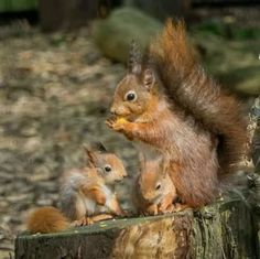 Cute Squirrel, Baby Squirrel, Squirrels, Squirrel Pictures, Cute Animal Pictures, Woodland Creatures, Woodland Animals, Nature Animals, Animals And Pets