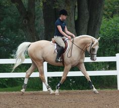 Golden Time by Timely Roberto (APHA Rsv. World Champion Sr. Working Hunter)