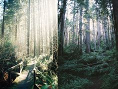 northern California - http://taylormccutchan.tumblr.com/post/46651668887/11-reasons-to-go-to-the-coast-of-northern