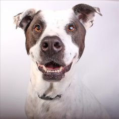 Zorr - SPCA of Texas (Dallas)
