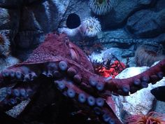 We met Cthulhu during a chaosium field trip to the Monterey bay aquarium