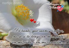 De tanto que sueño contigo, no sé si te tengo en mi mente, en mi vida o en mi corazón...
