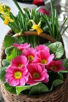 A Basket of Spring