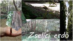 Photomontage a zselici erdő képeiről.
