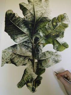 Aesthete Label love - English Oak (Quercus robur) botanical illustration Jess Shepherd