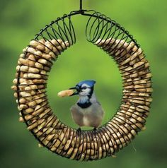 Bird Feeder made out of a Wire Hanger and a Slinky. As long as each end of the slinky is secure it'll hold peanuts or large feed.