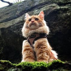 Everything the light touches is your kingdom, adventure cat. AdventureCats.org #AdventureCats  @avocadosquid