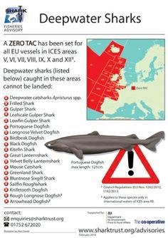 Deep Water Sharks Fisheries Advisory. #shark #SharkTrust