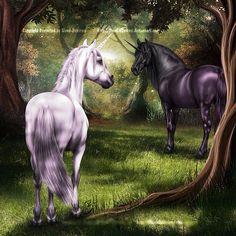 Black And White Unicorn Fantasy Myth Mythical Mystical Legend Licorne Enchantment Unicorn And Fairies, Unicorn Fantasy, Unicorns And Mermaids, Fantasy Art, Weird Creatures, Magical Creatures, Fantasy Creatures, Beautiful Creatures, Black Unicorn
