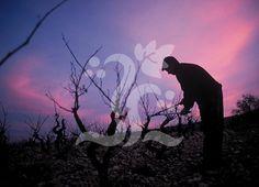Galería - Consejo Regulador de la Denominación de Origen Rioja