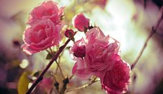 Care Rituals - Dr.Hauschka Cosmetics - Nature's treasures transformed for you