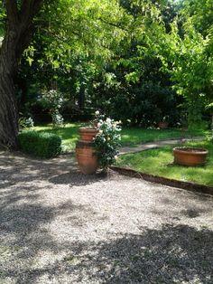 Firenze, orto botanico, particolare