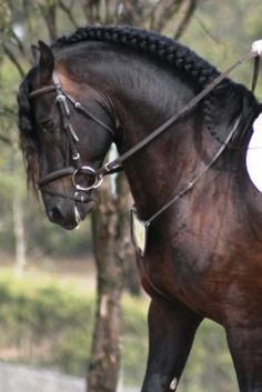 Beautiful Andalusian horse - Equine photography - by Tried n True