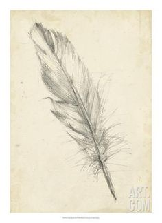 Feather Sketch III Giclee Print by Ethan Harper at Art.com