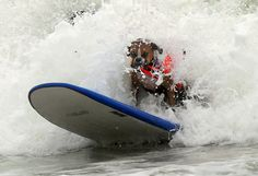 Huntington Beach Surf Dog competition in California - Telegraph