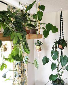 Hanging Plants by cleverbloom Vintage Stil, Shabby Vintage, Diy Hanging, Hanging Planters, Potted Plants, Indoor Plants, Porch Plants, Tomato Plants, Green Plants