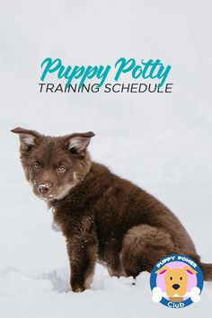 Establish a puppy potty training schedule week by week to help train even the most stubborn pup.