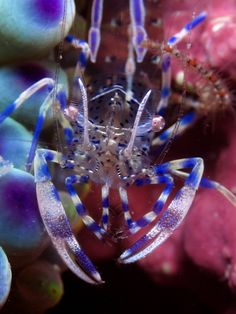 Find This Pin And More On SeaJewels By Cathy Meyer