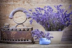 Dry Lavender And Vintage Style Royalty Free Stock Photo - Image: 36908455 Lavender Scent, Lavender Fields, Lavender Color, Lavender Flowers, Vintage Pictures, Vintage Images, French Lavender, Vintage Flowers, Beautiful Images